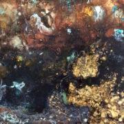 Majorica Astrea Watercolors